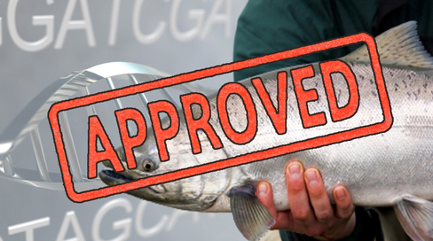 FDA Approves First Genetically Engineered Animal for Human Consumption Over the Objections of Millions