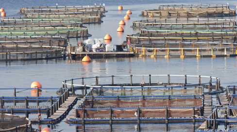 New Report Finds Ocean-based Fish Farming at Odds with Organic Standard