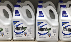 Farmworkers and Conservationists Ask Court to Remove Monsanto's Roundup from the Market