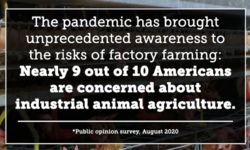 New Survey: COVID-19 Pandemic Has Brought Unprecedented Awareness and Consensus Regarding Factory Farming Risks